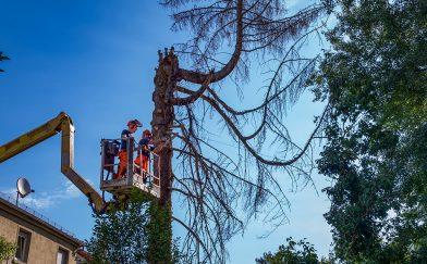 Baum fällen mit Kran